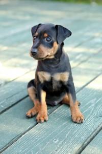 Hundehaftpflicht Test und Testbericht der Anbieter