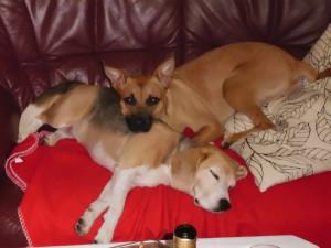 Kostengünstige Hundehaftpflichtversicherung Kosten