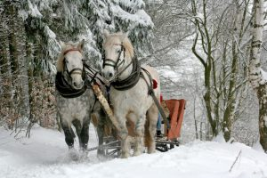 Pferdehaftpflichtversicherung günstig